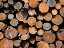 Biomassa nu geen optie in de Kempen