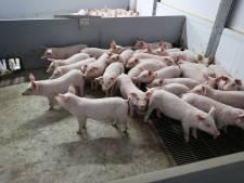 Raad van State ziet geen bezwaar tegen bouw stal voor 2000 varkens in Kring van Dorth