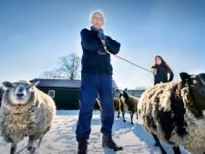Ze zijn vriendelijk en meegaand, maar je vindt geen makke schapen in Tanthof