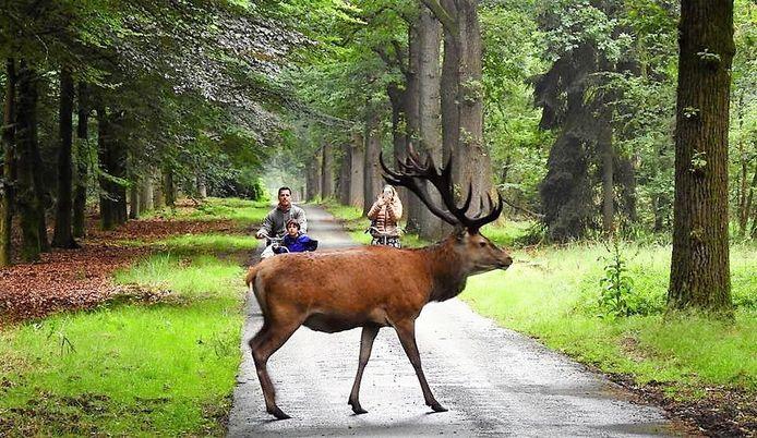 Een van de routes gaat door Het Nationale Park De Hoge Veluwe.