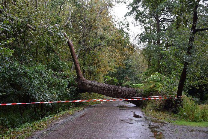 Een omgewaaide boom zorgde in Renesse voor een stroomstoring.