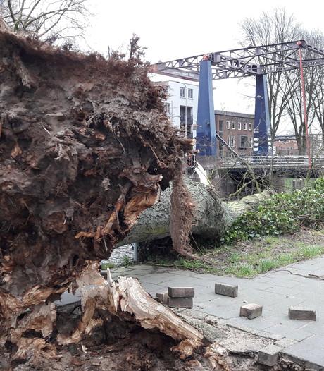 Storm toch niet doorstaan; gemeente haalt zes bomen bij Zuid-Willemsvaart weg