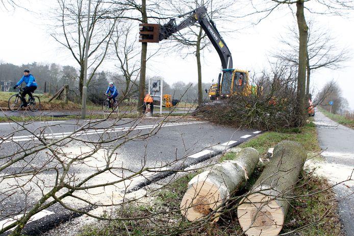 Het kappen van bomen is ook in Oldebroek van alle tijden. Zo sneuvelden er in 2010 zo'n 150 moeraseiken langs de Bovenheigraaf.