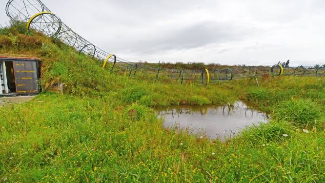 Midwinterhoornplantage bij N18 bij Eibergen als proeftuin: 'Traditie is ook toekomst'