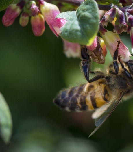 'Supermarkt moet bijengif uit de schappen bannen'