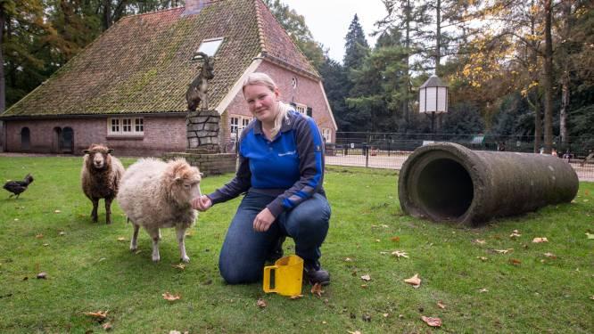 Kinderboerderij Eigen Erf in Rijssen weer open voor publiek: Na asbestsanering maar direct hele terrein aangepakt