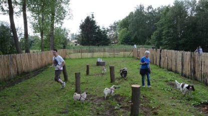 Groen licht voor aanleg nieuwe hondenspeelweide in Molenbeekpark