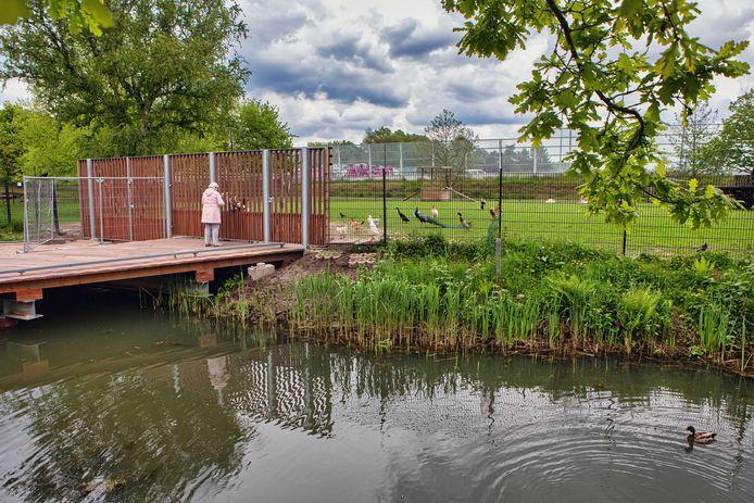 Park Overbos in Prinsenbeek wordt opgeknapt. Bij het dierenparkje is de brug al vervangen, evenals het hekwerk. De dieren haasten zich naar het nieuwe hek als een bezoeker met brood zich meldt.