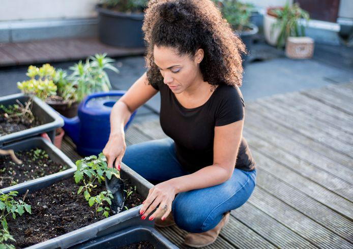 Kies voor kleihoudende potgrond in de daktuin, die minder snel uitdroogt.