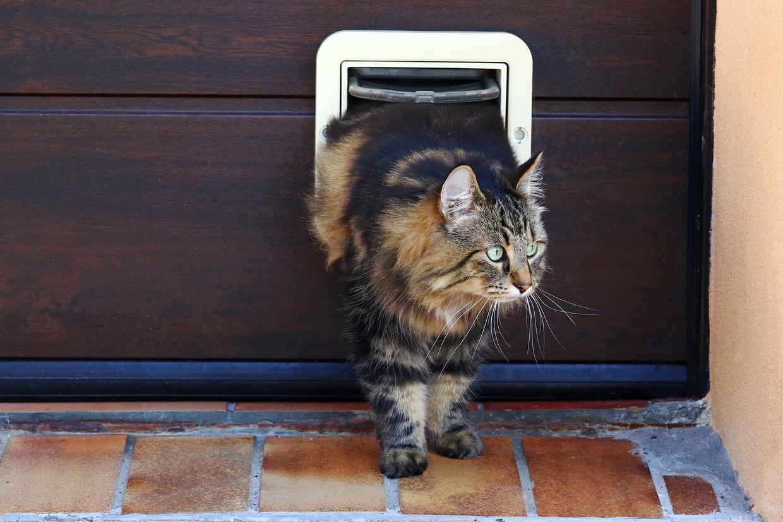 Katten ongecontroleerd naar buiten laten gaan, is illegaal. Beeld Shutterstock