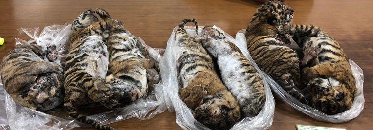 De zeven tijgertjes werd in de kofferbak van een auto aangetroffen.
