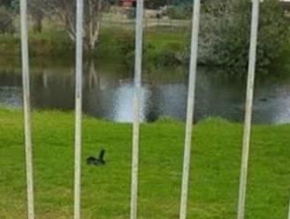 Een zwart eendje in het park, dacht ze. De waarheid blijkt iets pikanter