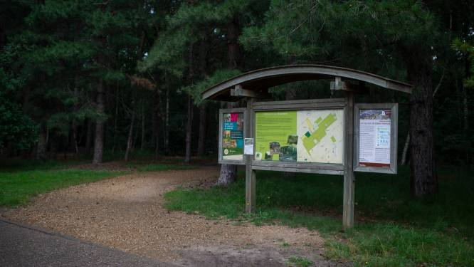 Koppel buizerds verdedigt nest in Elsenbos: gemeente waarschuwt wandelaars, fietsers en joggers