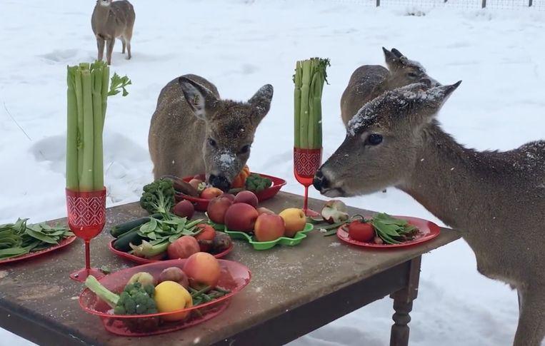 VIRAL3: Herten genieten van gezellig etentje.