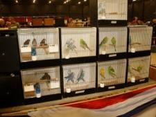 Evenementenhal Hardenberg heet verhuisde vogelmarkt welkom
