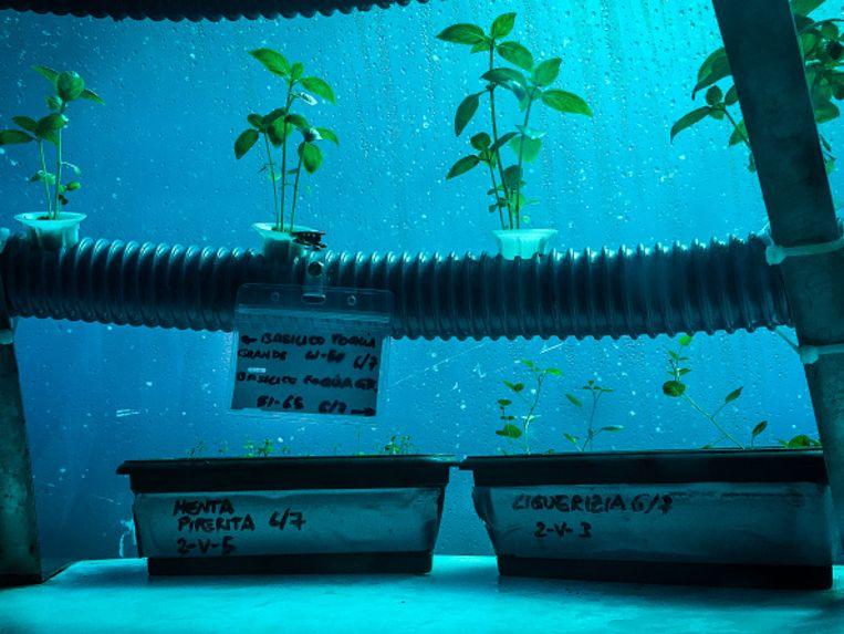Omdat de plantjes zich op tien meter onder het wateroppervlak bevinden, krijgen ze voldoende zonlicht zonder daarbij te op te warmen Beeld nemo's garden