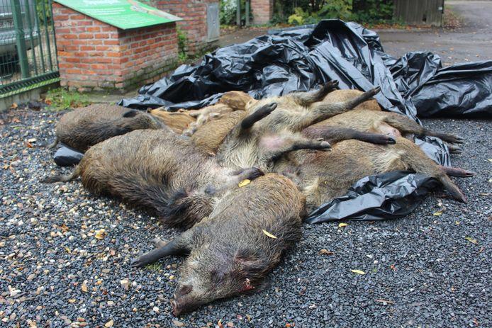 De kadavers werden geborgen door het Vogel- en Zoogdierenopvangcentrum.