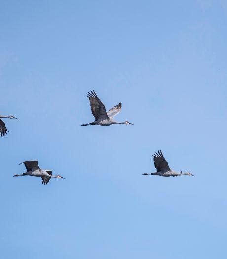 Lente, en daar vliegen de kraanvogels boven Twente en de Achterhoek