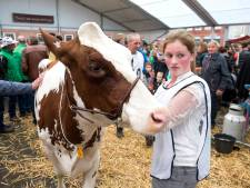 Gaat de Koeiemart dit jaar dan wél door? De gemeente Woerden heeft goede hoop van wel!