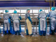 Iedere visfileerster heeft haar eigen mes dat is gaan staan naar haar manier van werken