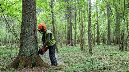 """""""Polen moet stoppen met oerbos te kappen"""""""