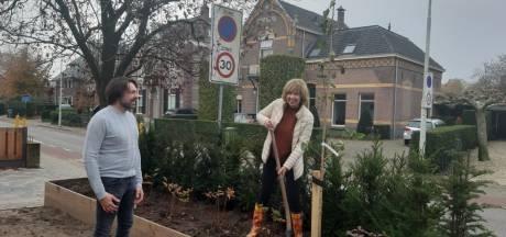 Doetinchem heeft in 4 jaar 5.000 bomen uitgedeeld