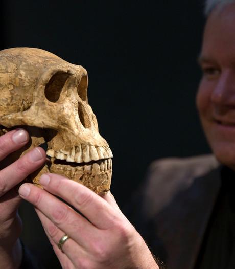 Bijzondere ontdekking: We stammen mogelijk af van Neo, een Homo naledi