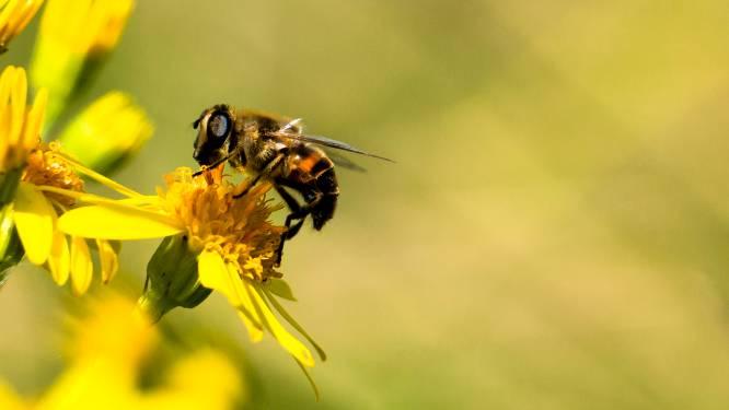 Onderzoekers analyseren bloemvoorkeur van bijen langs 82 bloemenranden