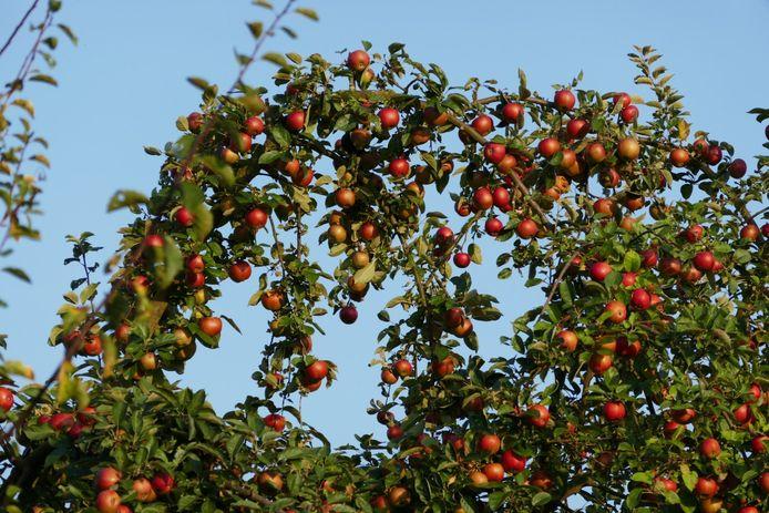 De komende week is er nachtvorst voorspeld. Dit kan een groot probleem zijn voor de fruitteelt.