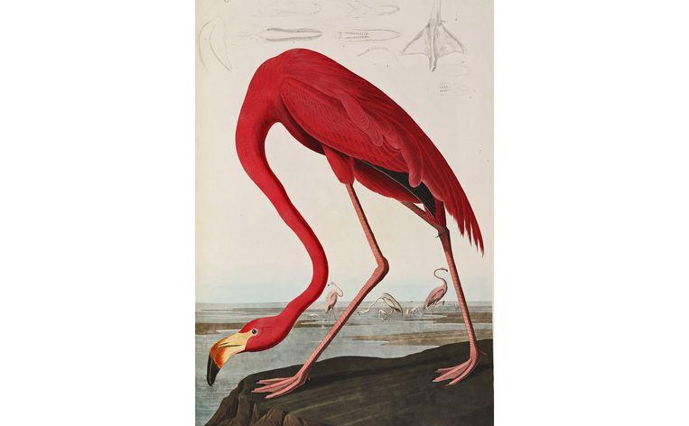 null Beeld John James Audubon (1785-1851), The Birds of America (1827-1838)