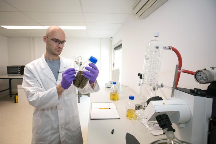 Medicinale canabis wordt in een lab geproduceerd. Op foto Tobias Postma aan het werk.