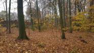 250.000 euro subsidie voor bosuitbreiding