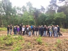 Uden heeft geleerd van veelbesproken uitdunning van Peelse bossen