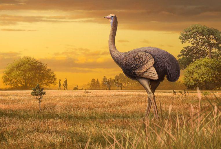 Tekening van loopvogel waarvan fossiel is ontdekt op de Krim Beeld Andrey Atuchin