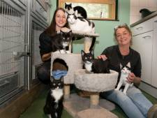 Katten massaal gedumpt, dierenasiel mudvol: We vinden kittens op straat waarvan we weten dat ze in huis zijn opgegroeid'
