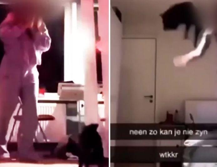 Sur les images, on voit la jeune fille lancer son chien au plafond et le laisser tomber.