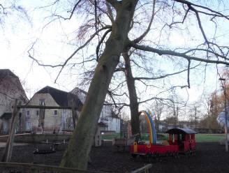 Stadsbestuur kapt twee bomen in domein 't Speelhof na stormweer