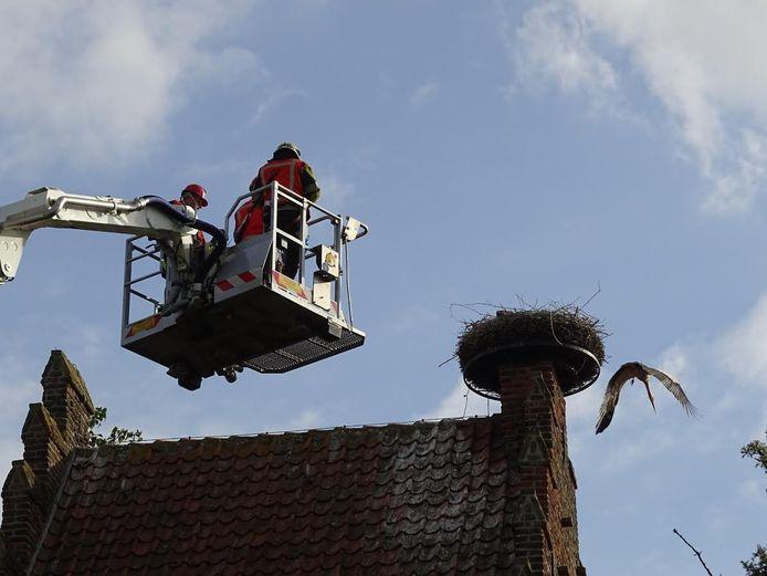 Ouderooievaar verlaat nest bij naderen hoogwerker