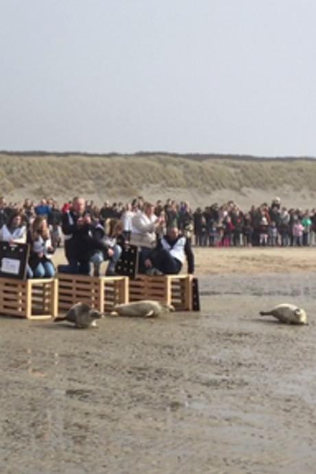 Zes zeehonden vrij, maar gelijk alweer drie bassins bezet
