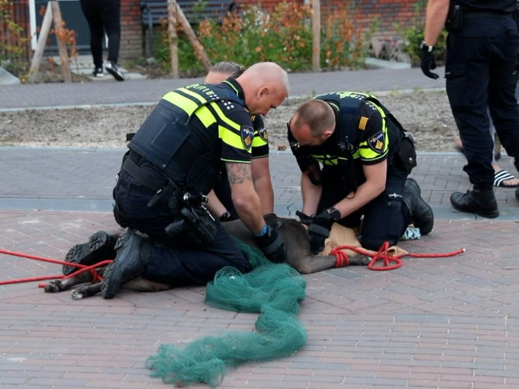 Agressieve hond bijt twee mensen en andere hond, ook eigenaar komt er niet ongeschonden vanaf
