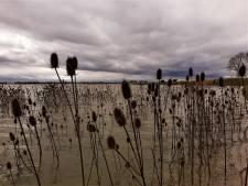 Vogelgriep gaat aan de Biesbosch voorbij, maar hoe lang nog?