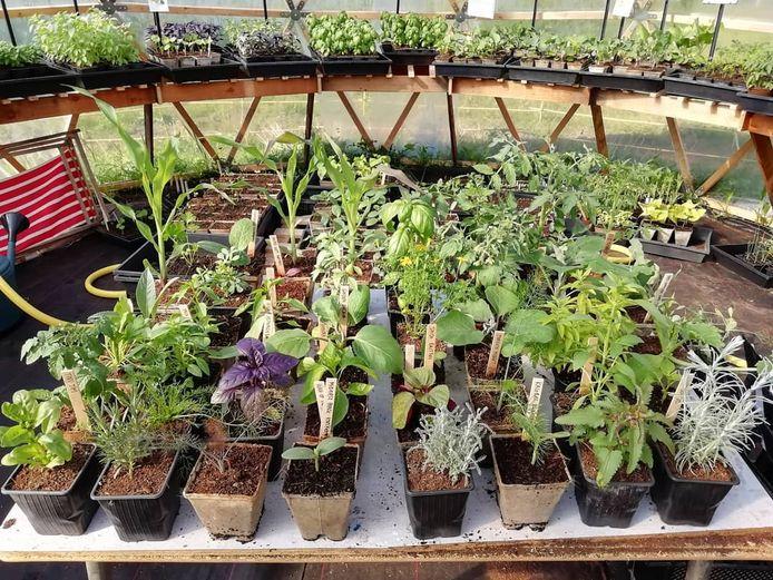 De planten worden honderd procent natuurlijk gekweekt, en de potjes zijn gerecupereerd of afbreekbaar.
