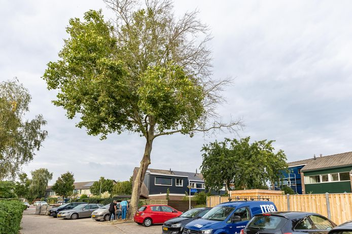 Buurtbewoners nemen de schade op bij de boom.