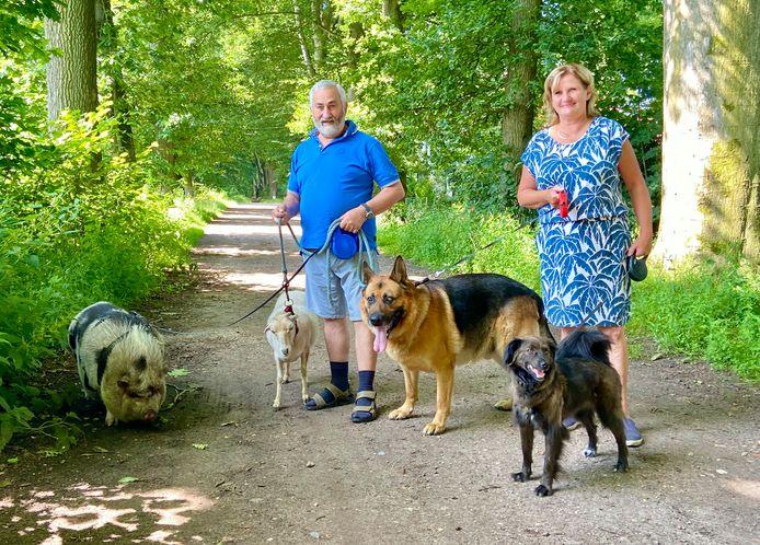 Op wandel met een beestrijk gezelschap. Hangbuikzwijn Knor, schaap Liesje, Duitse herder Dax en de Roemeense straathond Figo