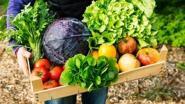 Vlaamse centen voor 'De tuin van eten. Groenten in de vitrine'