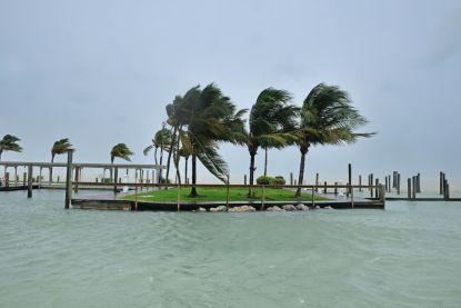 Dodelijke ziekte bedreigt iconische palmbomen Florida