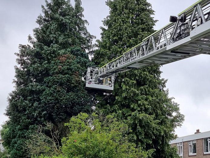 Kat Dobey is gered door de brandweer, nadat ze een aantal uren in een boom doorbracht.