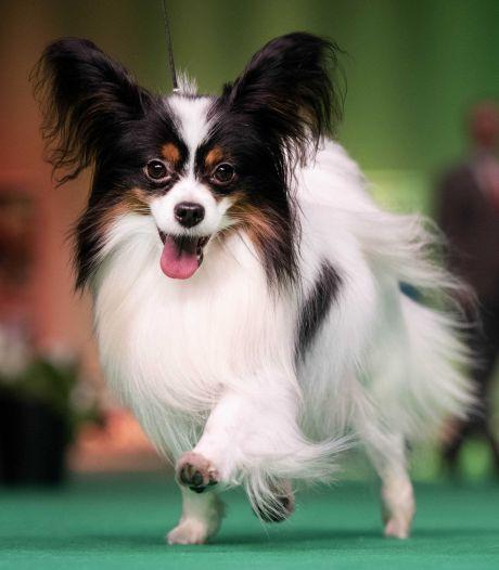Lezers over het afschaffen van de hondenbelasting: 'Er is voor katten en paarden ook geen belasting en die schijten ook op straat'