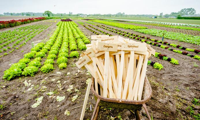 Peet de Krom van Biotuinderij De Kromme Lepel in Lepelstraat. Peet en Elza de Krom telen groenten en fruit op veganistische basis, als een van de eersten in Nederland.