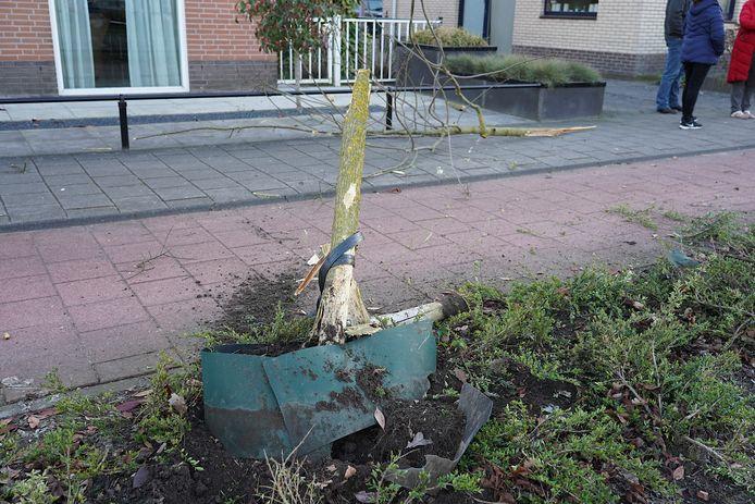 Door de harde klap brak de boom